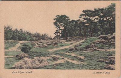 NEDERLAND - De Heide in Bloei