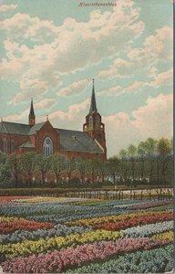 NEDERLAND - Hiacinthenvelden
